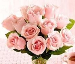 Dozen Pink Medium Stemmed Roses Wrapped