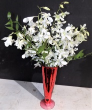 White Orchids in a Red Vase