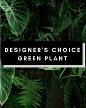 Designer Choice Green Plant Huge