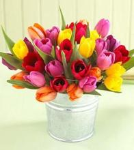 30 Tulips in Pail