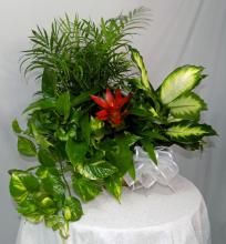 Blooming Plant Basket Medium