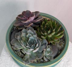Triple Planter of Succulents