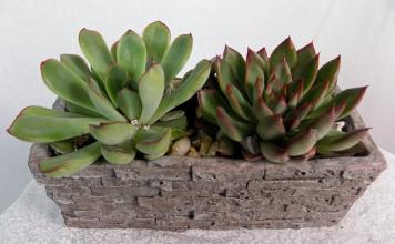 Simple Succulents