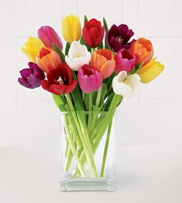 10 Tulips Prettiest One color