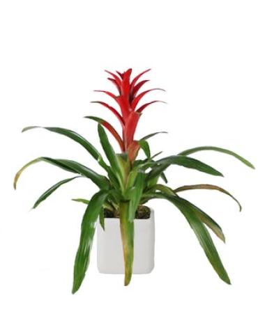 Small Bromeliad in Metal Container