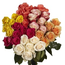 Half Dozen Prettiest Color Roses - Vday