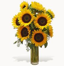 Super Sunflowers