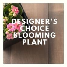 Designer Choice Blooming Plant Small