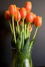 10 Orange Tulips in a vased