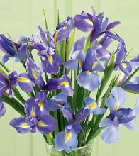 Iris Splendor Bouquet