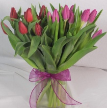 20 Tulips, Two Colors, In a Vase