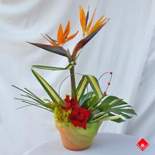 Bird of Paradise Topiary