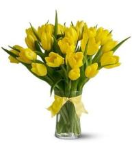 20 Yellow Tulips in a Vase