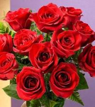 Dozen Red Medium Stemmed Roses Wrapped