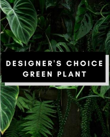 Designer Choice Green Plant Small